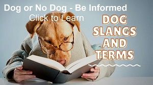 DogSploot.com